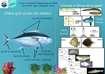 II Feria Científica del Mar en el Castillo de San Sebastián: Aportaciones de la linea de investigación Dinámica de poblaciones de peces